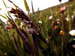 Morning dew in summer