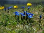 Burren Flowers