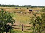 Vue d'ensemble du terrain avec les chevaux
