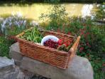 Produce from the market garden