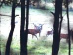 vue sur les cerfs et daims en semi-liberté