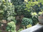 Patio view of garden