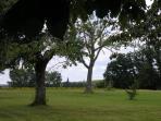 Our large landscaped garden