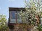 Blühender Pflaumenbaum zum Greifen nahe