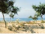 spiaggia alberata  Tre Fontane
