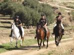 Our thorough bred horses with clients in full canter