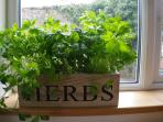 Herbs growing on the windowsill