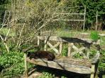 Tuppence the cat enjoying the sunshine on one of our many benches in the garden.