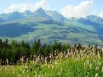 Alpine meadow near Chalet Epicea