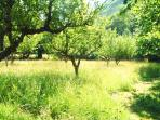 half the orchard is cut so loads of space to play and relax-hammock, loungers, garden games supplied