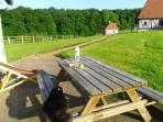 terrasse au soleil - environnement de verdure