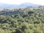Olive Grove View from Master Bedroom Balcony
