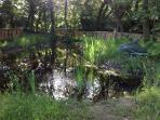 pond and walkway in our woodland