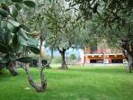 Ulivi's garden