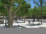 A game of Boules in the PLace des Lices
