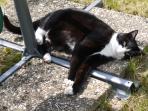 Réglisse, notre chat