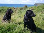 Dogs on the cliff front