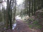 The house is deep in the Snowdonia National Park, you can walk out directly onto this woodland path