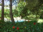 VIEW OF THE POOL AND GARDEN FROM THE COURTYARD OVER A HIBISCUS HEDGE