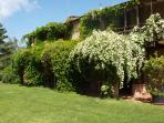 Holiday rental in splendid Tuscan farmhouse with swimming pool and B&B service