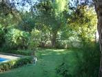 SECLUDED SPANISH GARDEN AND A LAWN