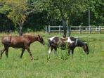 The horses of the ridingschool nextdoor