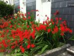 The stunning Diablo flowers, in full bloom in July. Come and see us soon!