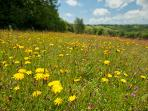 Denmark Farm's meadows are a riot of colour and buzzing with bees and butterflies in the summer