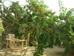 Notre jardin 4