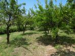 Feel free to pick whatever is ready from our orchard.