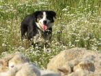 Heading  Dog-Sam