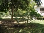 Maidstone gardens