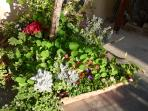 The colourful courtyard garden