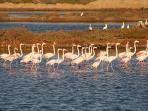Flamingos by Alexandre Moleiro (4 Nov 2007)