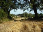 Farm at harvest time