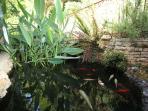 bassin à carpes