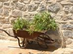 The herb garden!