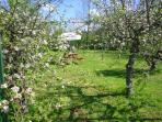 Relax in the seperate garden/orchard with picnic table