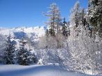 Ski in the trees