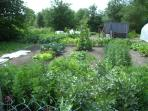 The potager - fresh fruit and veg available