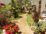 Beautifully planted garden