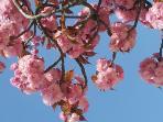 N'oubliez pas qu'ici le printemps est là plus tôt que chez vous pour la plupart !