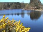 Bruntis Loch, a short walk from the cottage through the forest alongside Bruntis Burn.