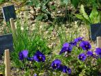 Des plantes aromatiques à votre disposition pour ensoleiller votre cuisine