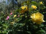 Jardín. Zonas comunes