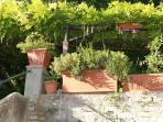 Flower pots under the vine