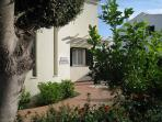 Front garden showing lemon tree and shaped olive tree