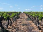 Meynes a aussi ses vignes et de très très bons vins à découvrir !