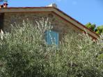 front of the house with olive trees