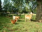Our animal enclosure